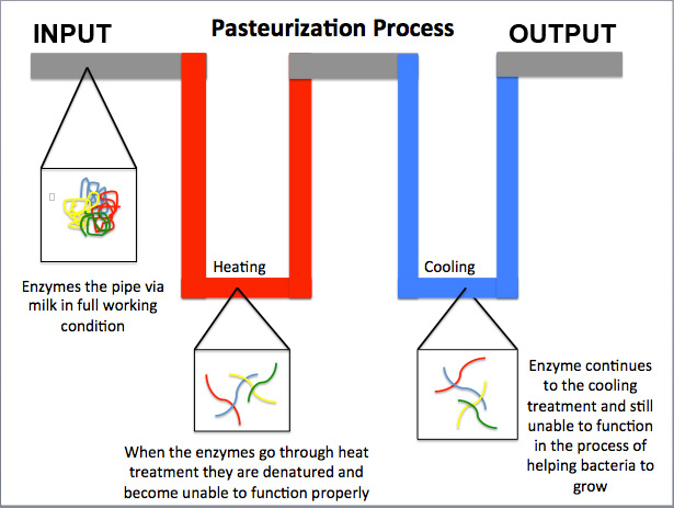 Pasteurization proces of cider