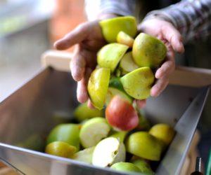 Drtičky ovoce